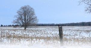 árvore só de 4K UltraHD em uma paisagem nevado video estoque