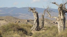 Árvore só do deserto no meio das montanhas vídeos de arquivo
