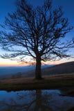 Árvore só do outono na parte superior do monte da montanha da noite Imagens de Stock