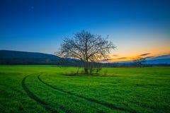 Árvore só em um campo verde no tempo de inverno do por do sol foto de stock royalty free