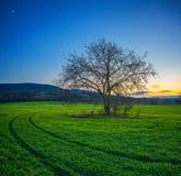 Árvore só em um campo verde no tempo de inverno do por do sol imagens de stock royalty free