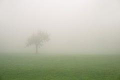Árvore só em um dia nevoento fotografia de stock royalty free