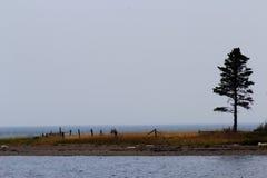Árvore só em um estiramento da ilha Foto de Stock Royalty Free
