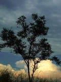Árvore só em um fundo crepuscular foto de stock