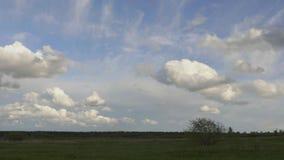 Árvore só em um fundo das nuvens filme