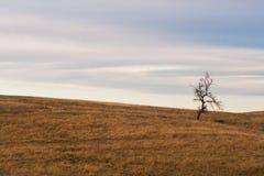 Árvore só em um pasto Fotografia de Stock Royalty Free