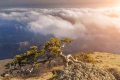 Árvore só em um penhasco nas montanhas Foto de Stock Royalty Free
