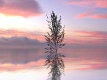 Árvore só em uma água ilustração do vetor