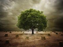 Árvore só em uma paisagem desmatada ilustração royalty free