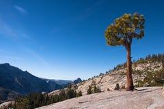 Árvore só em uma rocha Foto de Stock