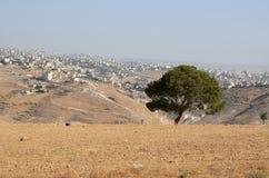 Árvore só fora de Bethlehem imagem de stock royalty free
