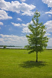 Árvore só, lago Palic, Serbia Imagens de Stock