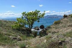 Árvore só na costa rochosa do cabo Meganom, Crimeia Imagem de Stock