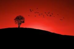 Árvore só na montanha Imagens de Stock Royalty Free