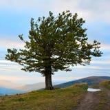 Árvore só na montanha do outono Fotografia de Stock Royalty Free