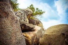 Árvore só na montanha superior no fundo do céu Imagens de Stock Royalty Free