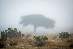 Árvore só na névoa imagem de stock