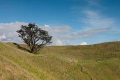 Árvore só na parte superior do pico vulcânico do mt wellington Foto de Stock Royalty Free