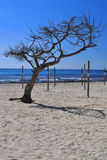 Árvore só na praia fotografia de stock
