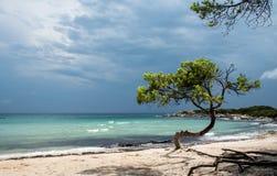 Árvore só na praia Foto de Stock Royalty Free