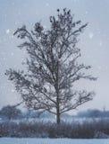 Árvore só na queda de neve imagens de stock