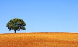 Árvore só na região do Alentejo Fotografia de Stock Royalty Free