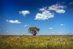 Árvore só no campo contra o céu azul Imagens de Stock