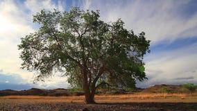 Árvore só no campo do verão contra um céu bonito video estoque