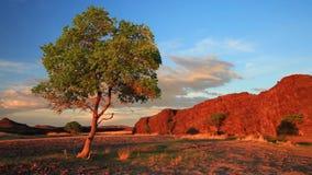 Árvore só no campo do verão no por do sol video estoque