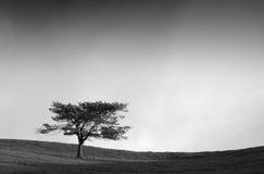 Árvore só no campo em preto e branco Fotos de Stock