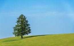 Árvore só no campo verde imagens de stock
