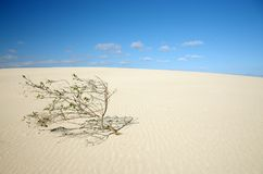 Árvore só no deserto Fotografia de Stock Royalty Free