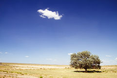 Árvore só no deserto Imagens de Stock