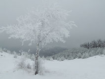 Árvore só no Frost Imagem de Stock Royalty Free