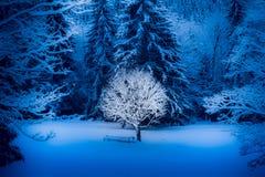 Árvore só no inverno Imagem de Stock Royalty Free