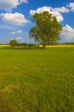 Árvore só no prado Imagens de Stock