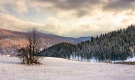 Árvore só no prado nevado em montanhas do inverno foto de stock