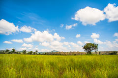 Árvore só no prado verde vasto Fotografia de Stock Royalty Free