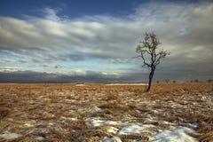 Árvore só no vale Fotografia de Stock Royalty Free