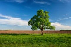 Árvore só perto da terra arável imagem de stock