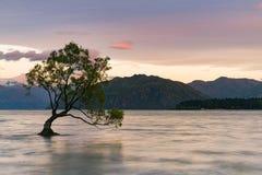Árvore só sobre o lago da água de Wanaka com fundo da montanha imagens de stock royalty free