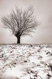 Árvore só tonificada Fotos de Stock