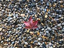A árvore sae na rocha com os ramos na manhã ensolarada do outono Fotografia de Stock Royalty Free