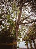A árvore santamente imagem de stock royalty free