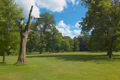 Árvore seca Fotos de Stock Royalty Free