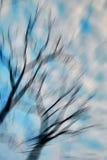 Árvore seca Imagens de Stock
