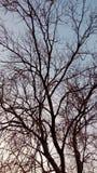 A árvore seca imagem de stock