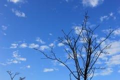 Árvore seca Foto de Stock
