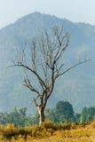 Árvore seca com uma montanha Imagem de Stock Royalty Free