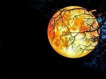 árvore seca da silhueta super da lua do sangue foto de stock